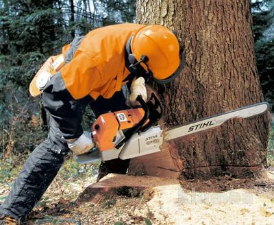 Спил деревьев фото №1