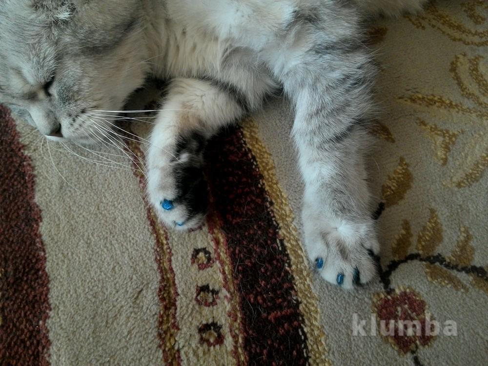 Антицарапки, силиконовые накладки на когти для котов, 17 цветов фото №1