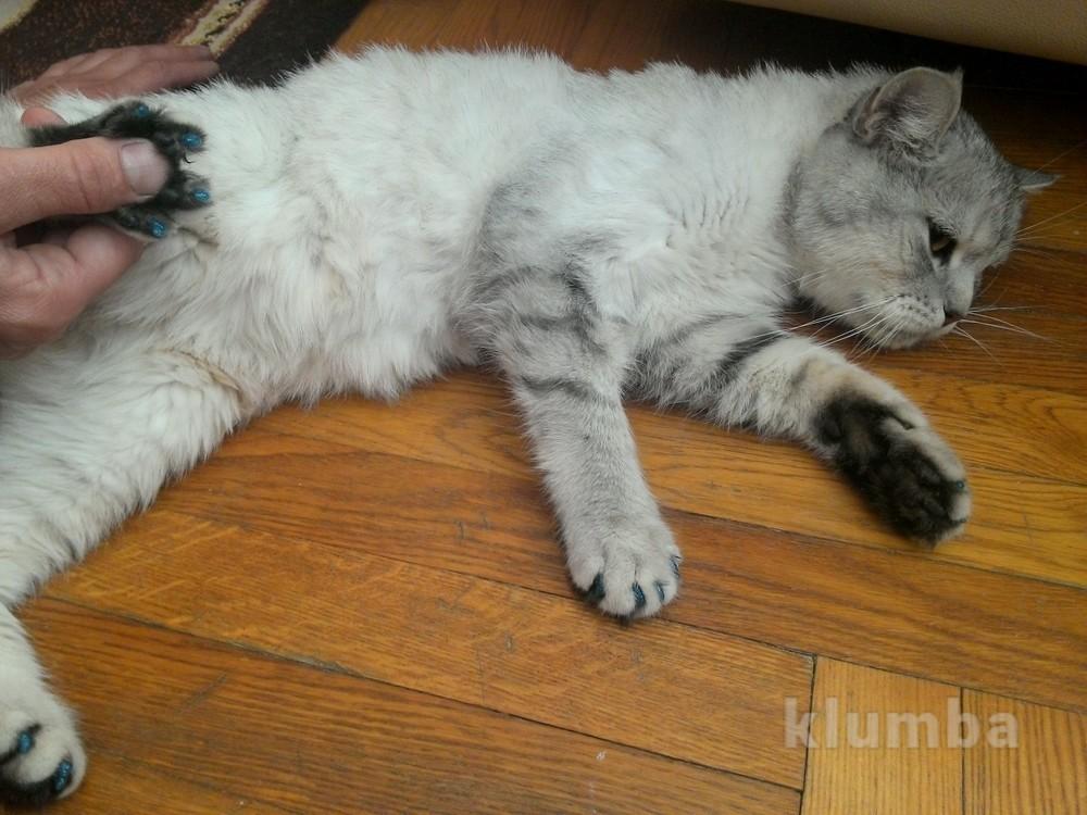 Антицарапки, силиконовые накладки на когти для котов, 17 цветов фото №3