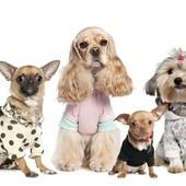 Гостиница для животных в домашних условиях