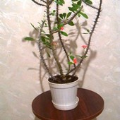 комнатные растения для дома и офиса