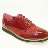 Туфли бордовые шнурок Т703