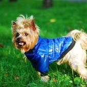 Куртка для собак Dogs Bomba