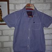 Стильная рубашка 4-5 л 110 см Хлопок Rebel