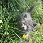 Котята ищут семью Срочно!!!!