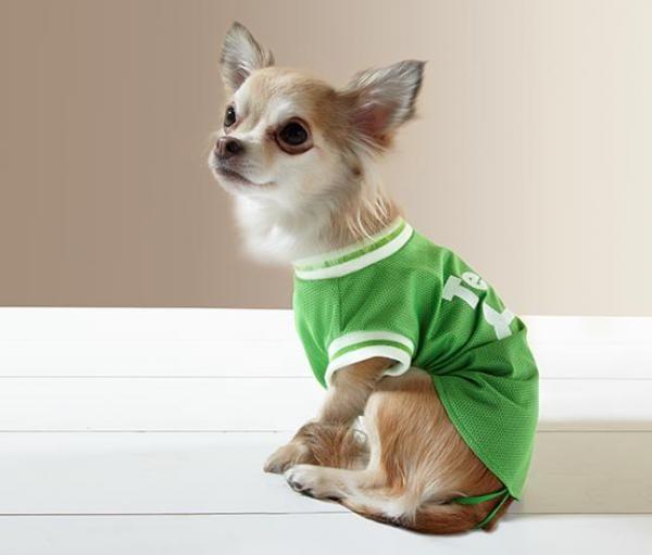 Майка для маленьких собак от tchibo германия фото №1