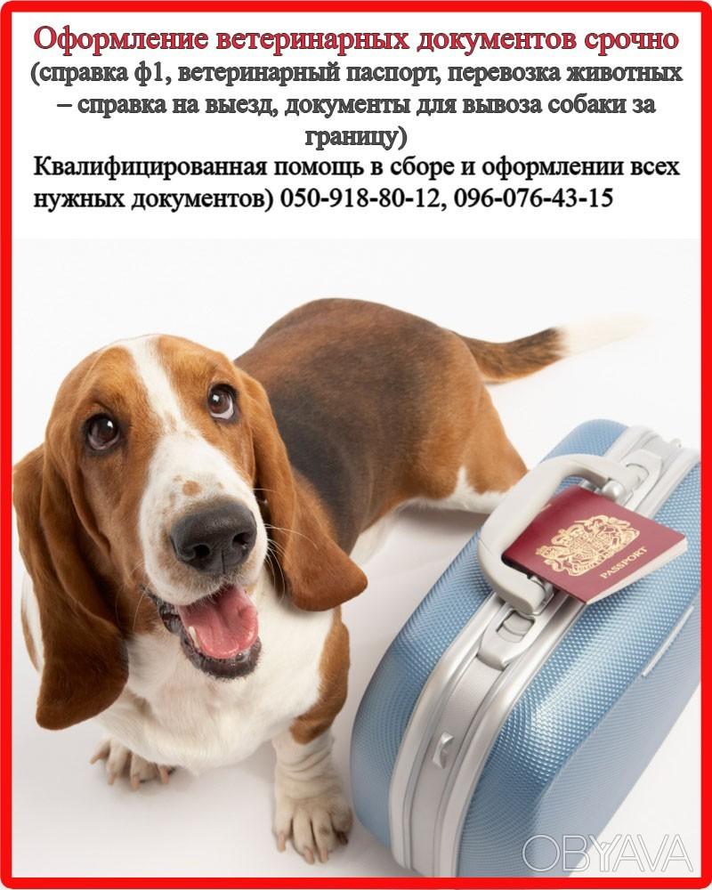 Оформление ветеринарных и разрешительных документов для вашего любимца, харьков фото №1