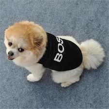 Одежда boss для маленькой собачки или котика фото №1