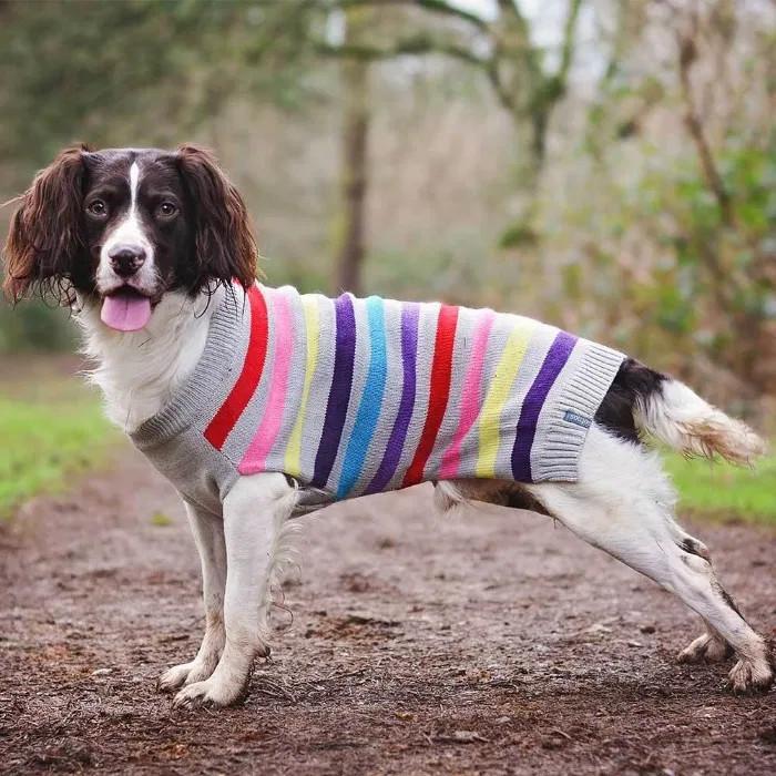 Одежда для собак sotnos фото №1