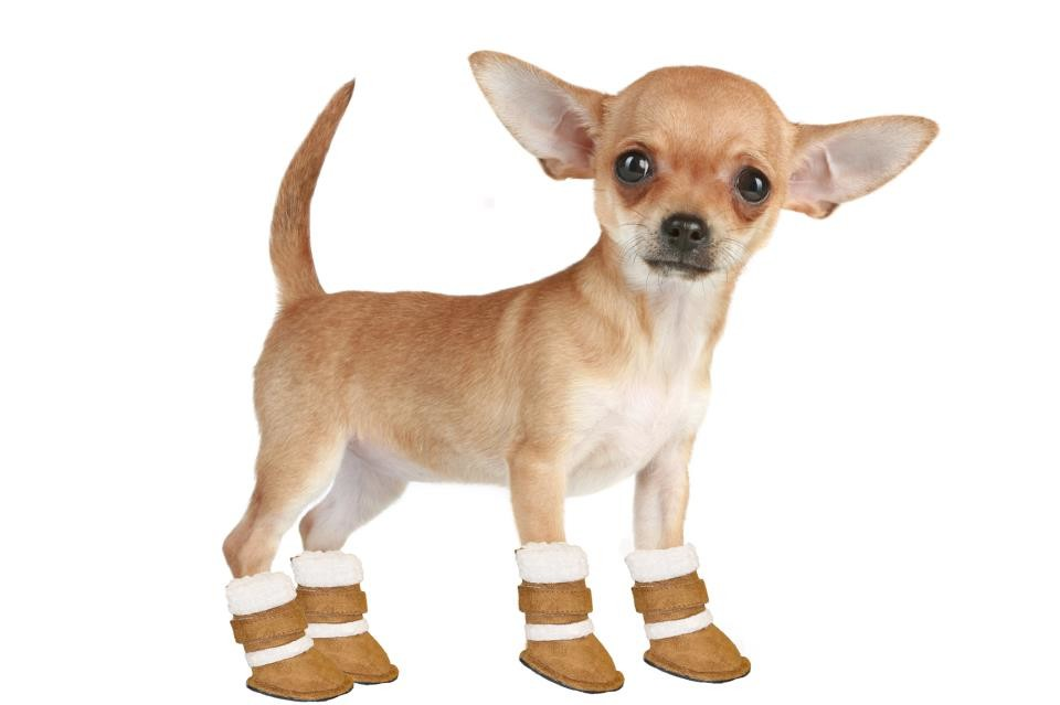 Обувь для собачки фото №1