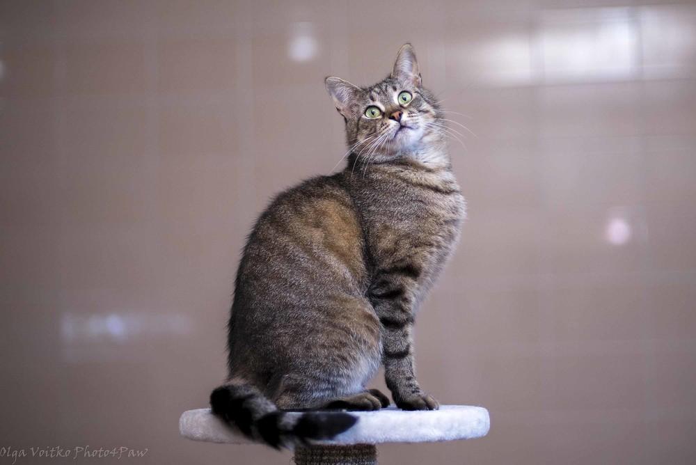 Отдам в хорошие руки милого котика тимошу фото №1