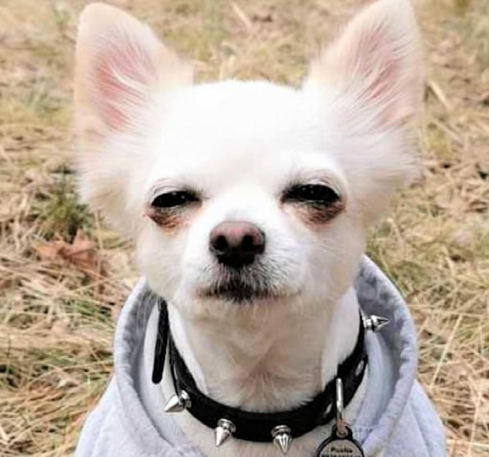 """Ошейник шипами """"lockdog"""" на маленькую собаку черный фото №1"""