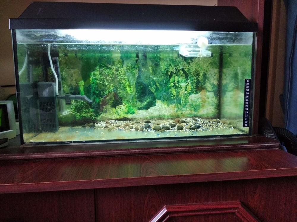 Аквариум на 40 л воды в комплекте с акссесуарами для ваших рыбок фото №1
